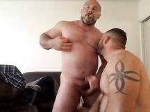 Orsi gay grassi