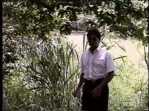 Una sega in giardino